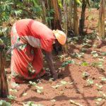 pridelava-hrane-na-najeti-zemlji